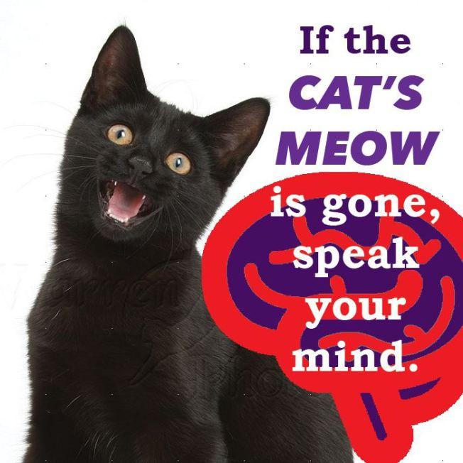 cat-proverb