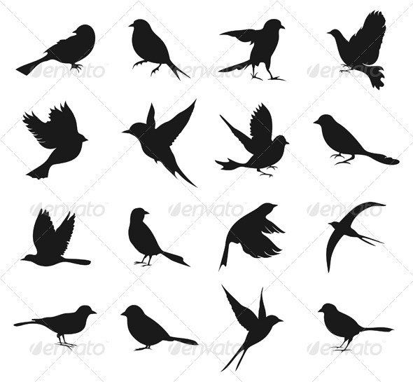 Silhouette of birds2590